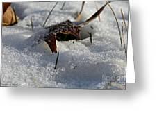Frozen Oak Greeting Card