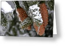 Frozen Pine Tree Greeting Card
