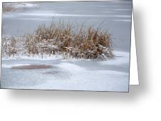 Frozen Reeds Greeting Card