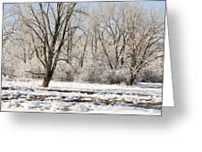 Frozen Swamp Greeting Card