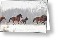 Frozen Track Greeting Card