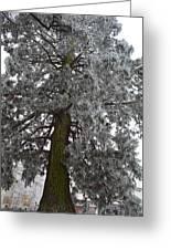Frozen Tree 2 Greeting Card