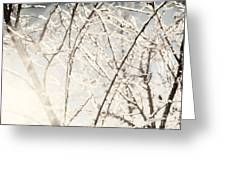 Frozen Tree Branches In Winter Greeting Card
