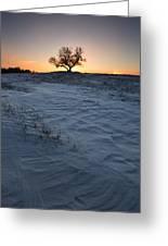 Frozen Tree Of Wisdom Greeting Card
