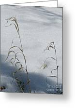 Frozen Wheat Greeting Card