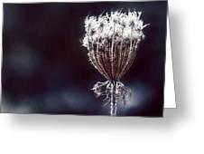 Frozen Wisps Greeting Card