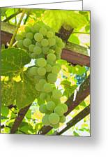 Fruit Of The Vine - Garden Art For The Kitchen Greeting Card