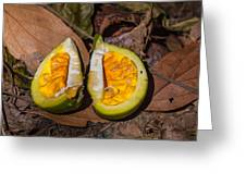 Fruit On The Forest Floor Greeting Card