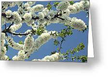 Fruit Tree Blooms Greeting Card