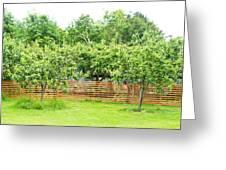 Fruit Trees Greeting Card