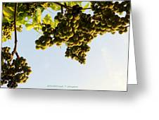 Fruits Of Nature Greeting Card