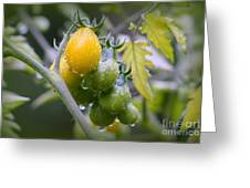Fruits Of Our Labours Greeting Card