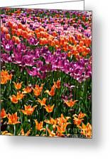 Fruity Tulips Greeting Card