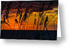 Ft. Myers Sea Oats Greeting Card