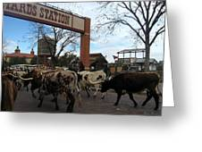 Ft Worth Trail Ride At Ft Worth Stockyard Greeting Card