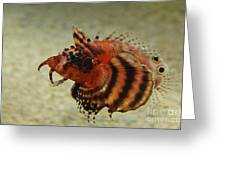 Fu Manchu Lionfish Greeting Card