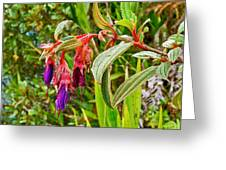 Fuchsia Along The Trail To Huayna Picchu-peru Greeting Card