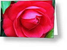 Fuchsia Camellia In Pastel Greeting Card