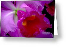 Fuchsia Cattleya Orchid Squared Greeting Card by Julie Palencia