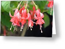 Fuchsia 'chang' Greeting Card