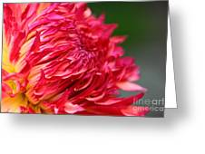 Fuchsia Flames Greeting Card