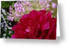 Fuchsia Peony And Pink Phlox Greeting Card