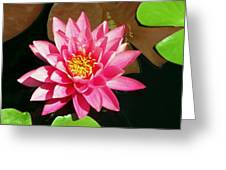 Fuchsia Pink Water Lilly Flower Floating In Pond Greeting Card