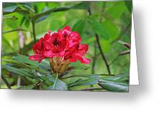 Fuchsia Rhododendron Moore State Park Greeting Card