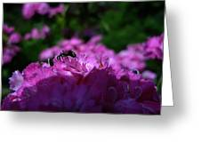 Fuchsia Sweetness Greeting Card