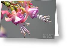 Fucsia Greeting Card