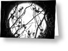 Full Moon And Poplar Branches Greeting Card