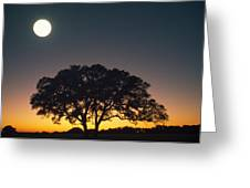Full Moon Over Silhouetted Tree Greeting Card