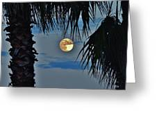 Full Moon Palm Tree 5 9/17 Greeting Card