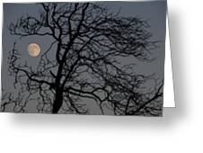 Full Moon Through A Tree Still Standing After A Fire Greeting Card