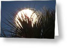 Full Moon Through The Palms Greeting Card