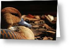 Fulvous Whistling Duck Greeting Card