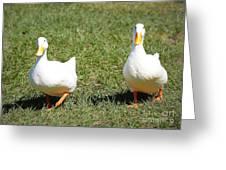 Fun Ducks Greeting Card