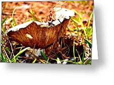 Fun Fungus Greeting Card