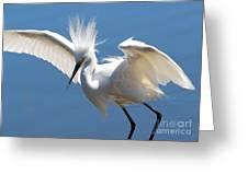 Fun Snowy Egret Greeting Card