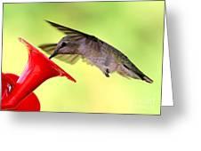 Fun Summer Hummingbird Greeting Card