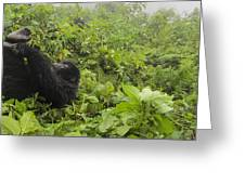 Fun Times In The Rainforest Greeting Card