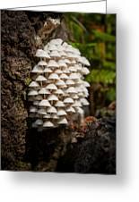 Fungal Gathering Greeting Card