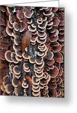 Fungi On Log Greeting Card