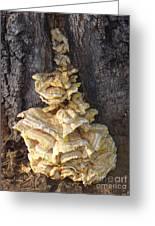 Fungi On Oak Greeting Card