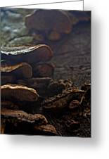 Fungus 11 Greeting Card