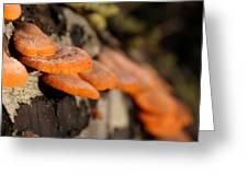 Fungus 2 Greeting Card