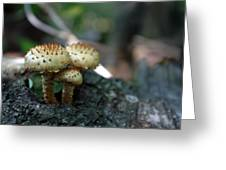 Fungus 8 Greeting Card
