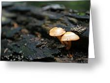 Fungus 9 Greeting Card