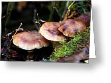 Fungus Among Us II Greeting Card