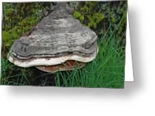 Fungus Among Us Greeting Card